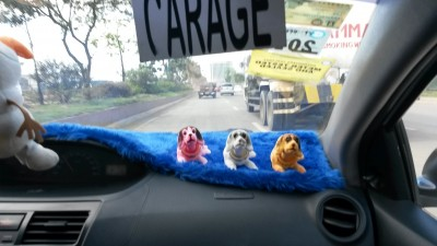 fun-fact-chiens-taxi-philippines