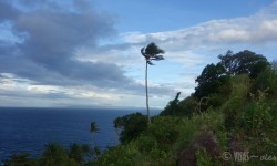 Apo Island (5)
