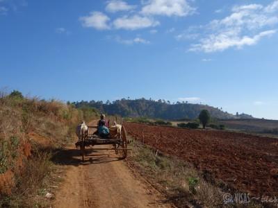 visas-vies-trek-kalaw-paysage