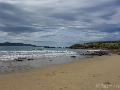 visas-vies-catlins-nz-purpoise-bay