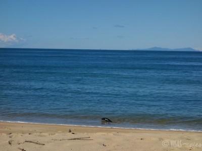 Abel-Tasman-visas-vies-randonnee-NZ-otarie