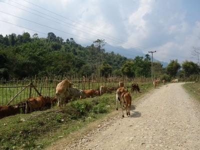 visasvies-tourdumonde-laos-vang-vieng (13)